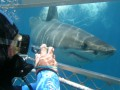 Shark Cage Dive Gansbaai TRF Adult Day Tour Incl. Transfer