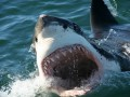 Shark Cage Dive Gansbaai SD Adult 2N Budget 3 Day Tour Self Drive