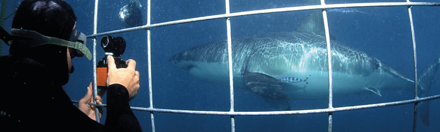 Great White Shark Cage Dive: Cape Town - sharkdiving co